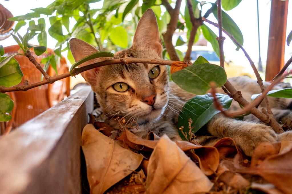 Katter som växer i rabatter